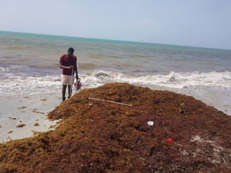 FST Partners with NEPA to Address Sargassum Seaweed in