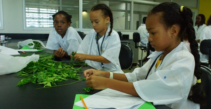 Mini Scientist Testing Plants for Antibacterial Properties